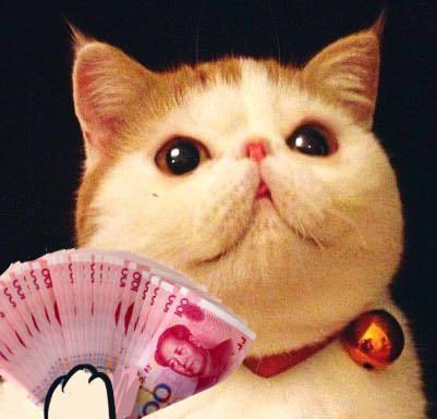 2013年1月18日-喜欢的一款表情包,不过,如果瓜皮猫表情包加上一些文字